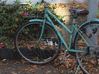 猫,自転車,屋外,緑,タイヤ,地面,落葉,ホイール,サイクル,縁石,駐輪