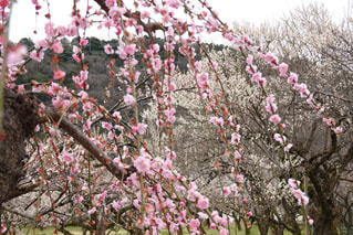 花園のクローズアップの写真・画像素材[3017554]