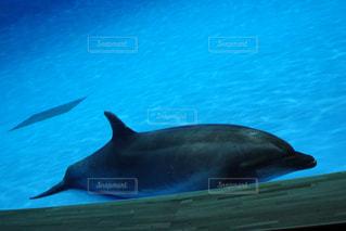 水の下で泳ぐ魚の写真・画像素材[3026924]