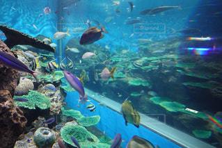動物,魚,水族館,水面,葉,泳ぐ,水中,サメ,ダイビング,海底,スキューバ ダイビング,シュノーケ リング