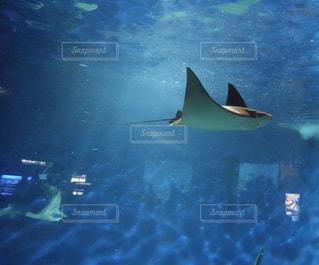 動物,魚,イルカ,水族館,水面,葉,泳ぐ,水中,サメ,エイ,クジラ