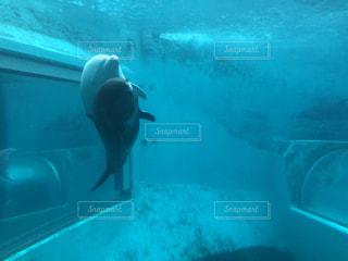水の下で泳ぐ魚の写真・画像素材[3027523]