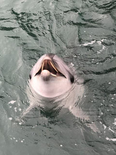 動物,魚,イルカ,水面,泳ぐ