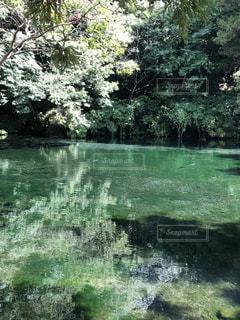 水の体の隣にある木の写真・画像素材[3027525]