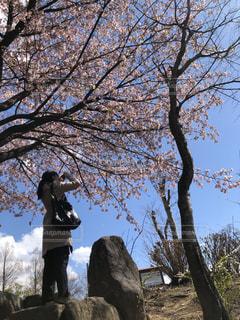 女性,風景,空,花,桜,屋外,樹木,草木,桜の木,さくら,山腹