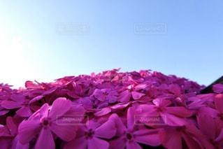 植物の上のピンクの花の写真・画像素材[3044008]