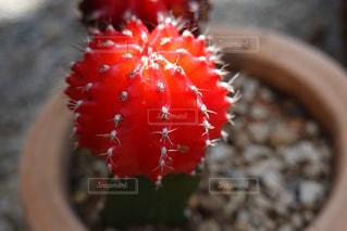 植物のクローズアップの写真・画像素材[3044013]