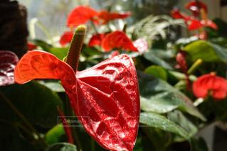 花,赤,草木,熱帯植物,フローラ