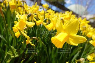 黄色い花の写真・画像素材[3044020]