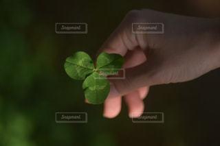 春,緑,手,葉,三つ葉,人,クローズアップ