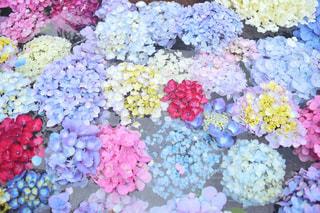 風景,花,ピンク,神社,赤,カラフル,青,水,紫,鮮やか,紫陽花,たくさん,梅雨,黄