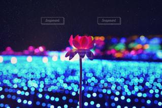 花,夜,赤,青,鮮やか,イルミネーション,キラキラ,明るい,玉ボケ