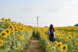 女性,1人,風景,空,花,夏,木,屋外,ひまわり,黄色,景色,向日葵,草木