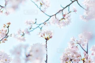 花のクローズアップの写真・画像素材[3079398]