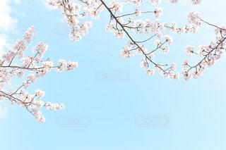 春の青空の写真・画像素材[3079399]