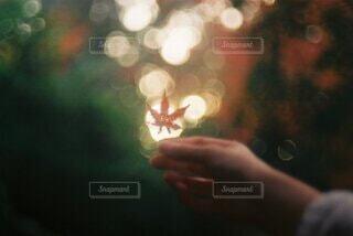 自然,風景,秋,紅葉,手,もみじ,ぼかし,手持ち,人物,ポートレート,フレア,明るい,野外,玉ボケ,ライフスタイル,手元
