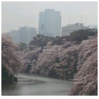 自然,空,桜,屋外,水面,霧,樹木,高層ビル,千鳥ヶ淵,日中