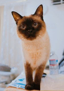 家族,猫,動物,屋内,かわいい,見つめる,おねだり,かまって