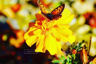 花,春,動物,オレンジ,flower,蝶,草木