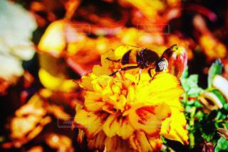 花,春,動物,蜂,昆虫,flower,草木