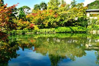 自然,風景,空,秋,屋外,水面,池,景色,反射,樹木,草木,鯉