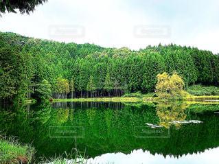 自然,風景,空,森林,屋外,緑,水面,池,景色,草,樹木,大地,新緑,草木,山腹