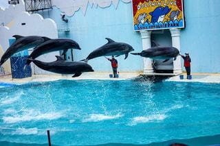 動物,イルカ,青,水族館,水面,飛ぶ