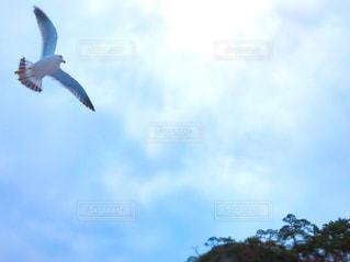 空を飛んでいる鳥の写真・画像素材[3019460]