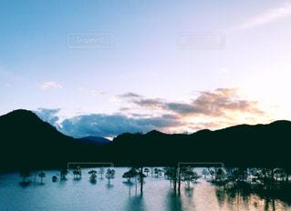 湖に浮かぶ樹木の写真・画像素材[3019465]