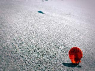 砂浜の写真・画像素材[3019462]