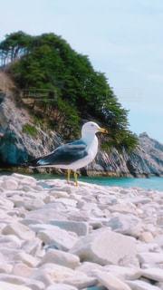 自然,海,動物,鳥,水面,岩,ウミネコ