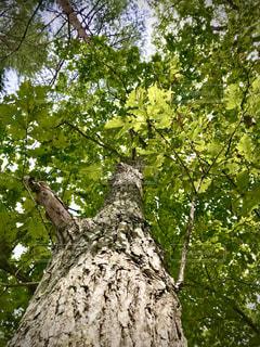 森の中の木の写真・画像素材[3143498]