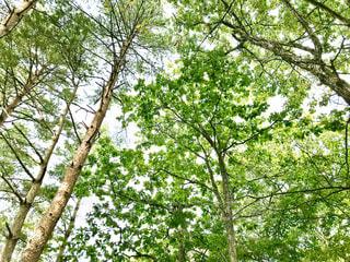 森の中の木の写真・画像素材[3143499]