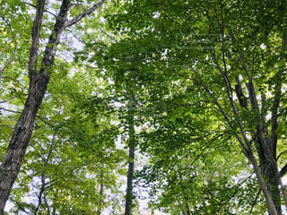 大きな木の写真・画像素材[3143502]