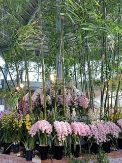 花,屋内,樹木,草木,ガーデン