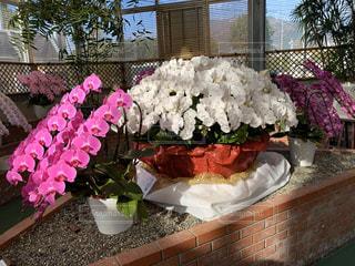 花,屋内,花瓶,テーブル,観葉植物