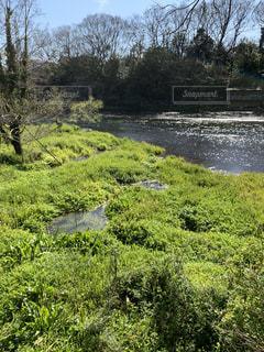 自然,風景,屋外,川,水面,景色,草,樹木,新緑,富士,湧水,草木