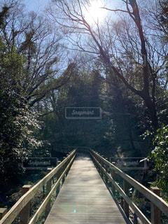 自然,空,橋,森林,屋外,樹木,道,草木