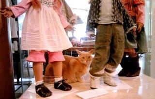 ダンシング中にネコの写真・画像素材[4789550]