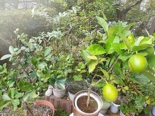 小さな庭の家庭果樹園の写真・画像素材[4917838]