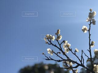 陽の光に透ける花びらの写真・画像素材[2998496]