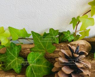 植物のクローズアップの写真・画像素材[2999534]
