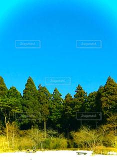 森林浴の写真・画像素材[3000191]