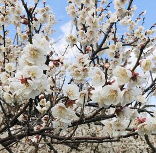 木に花の花瓶の写真・画像素材[3016323]