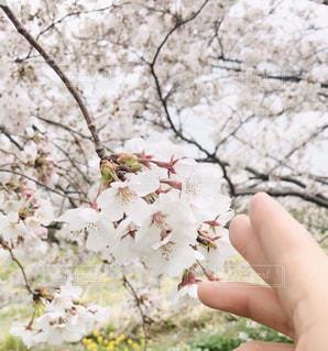 花の写真・画像素材[3057328]