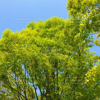 木のクローズアップの写真・画像素材[3148829]