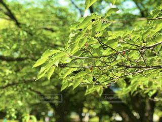 木のクローズアップの写真・画像素材[3199908]