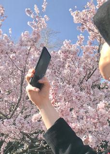 花,春,桜,お花見,ブロッサム
