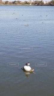 風景,鳥,屋外,湖,ボート,水面,池,泳ぐ,カモメ,鴨,休憩中