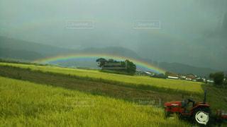 虹,田舎,景色,草,雨上がり,広々田園風景
